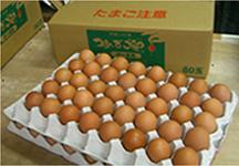 卵詰め写真