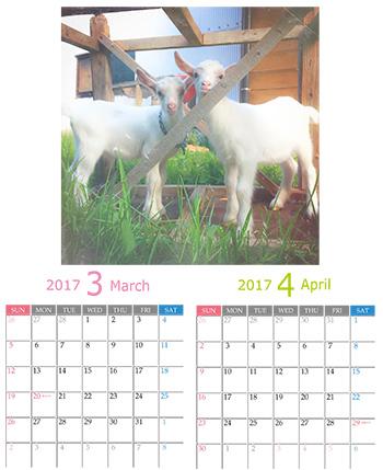 つまんでご卵芝やぎカレンダー2017